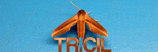 TRICIL & The Rise of Live Performance